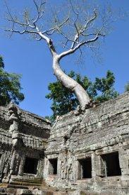 Spung Tree
