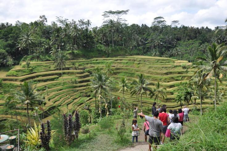 tegalalang-rice-terraces-ubud-bali