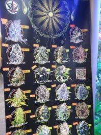 cannabis, dope