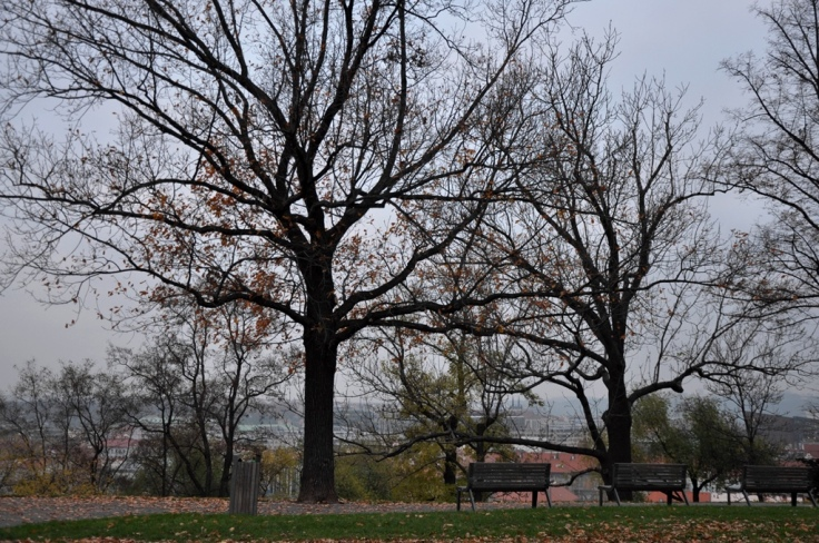 Vitkov Hill