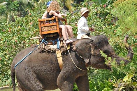elephant sancturay Bali1