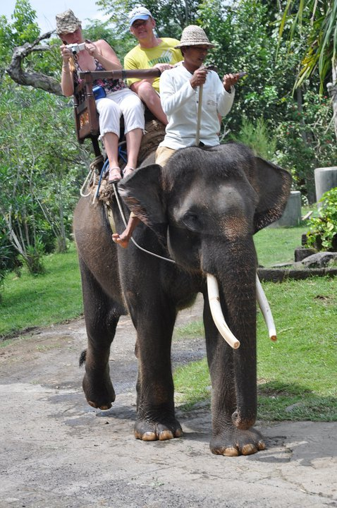 elephant sancturay Bali3