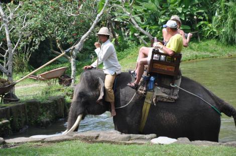 elephant sancturay Bali5