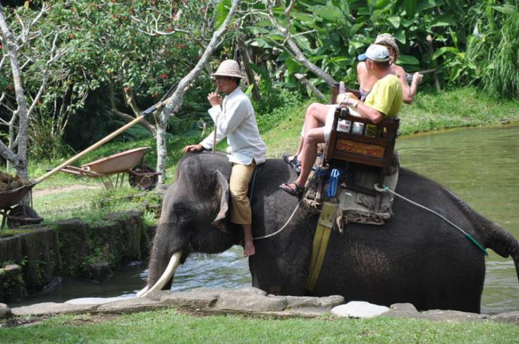 elephant sancturay Bali5