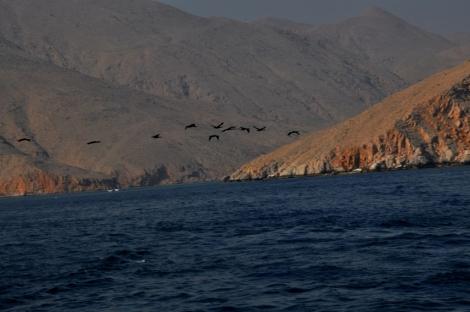 Oman Sea1
